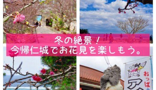 桜×海×世界遺産=絶景!今帰仁城で早いお花見を楽しもう(・∀・)