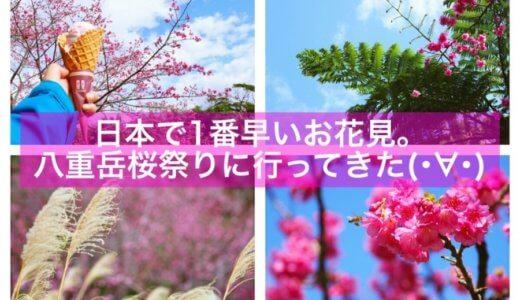 日本で1番早いお花見。本部町・八重岳桜祭りに行ってきたよ(・∀・)