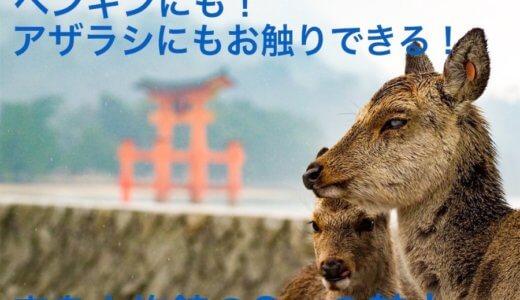 ペンギンにも!アザラシにもお触りできる!宮島水族館の3つの魅力。