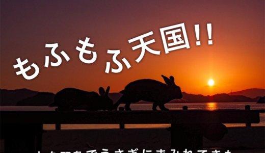 もふもふ天国!大久野島でうさぎと海を満喫してきたよ。
