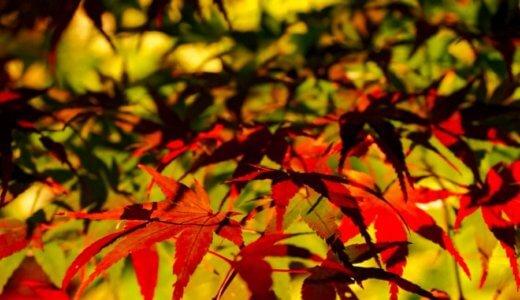 M.ZUIKO12-100mmF4.0で夜を切り取る。紅葉狩りとキラキライルミネーション@東山公園。